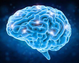 Creierul si neuronii din el